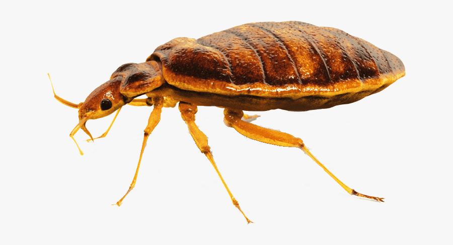 bed bugs Northeast Exterminators